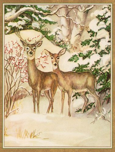 caspari_rare_card_-_two_deer_in_forest_2119085175