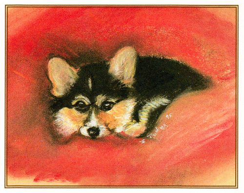 corgi-puppies-4890a_1654994442