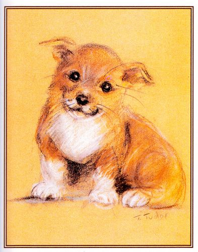 corgi-puppies-4890c_1004715761